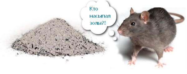 зола против мышей