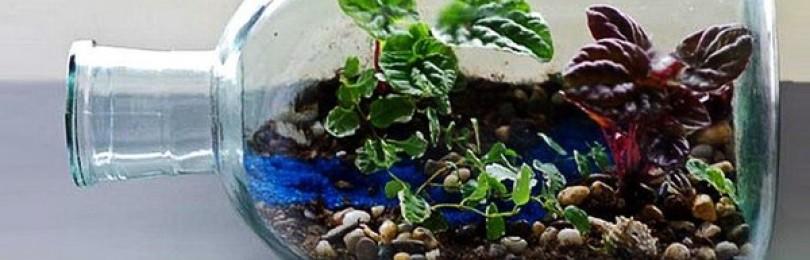 Как устроить флорариум (сад в стеклянной емкости)