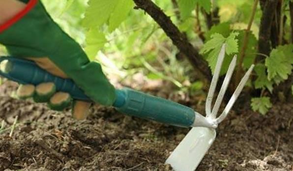 рыхление почвы в саду
