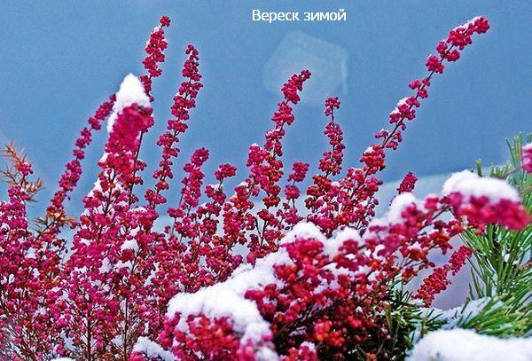 красиво зимой